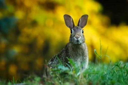兔子的故事有哪些?适合给孩子睡前讲的