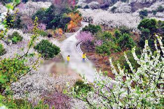 惠州旅游八大景点推荐,一定要去看看哦!